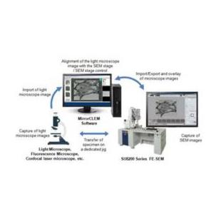 光-电联用显微镜法(CLEM)系统