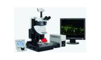 东北农业大学荧光体式显微镜等招标公告