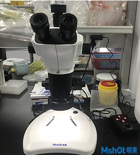 明美体视显微镜
