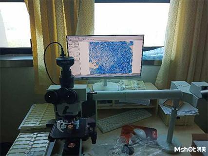 明美显微镜相机应用于教学案例爬片观察.png