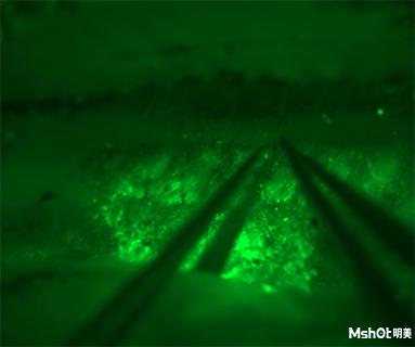 明美体视荧光显微镜