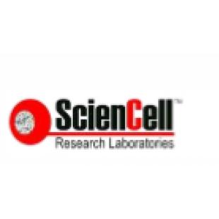 美国ScienCell MLF小鼠淋巴成纤维细胞  M2530-57