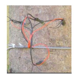 针插式茎流传感器