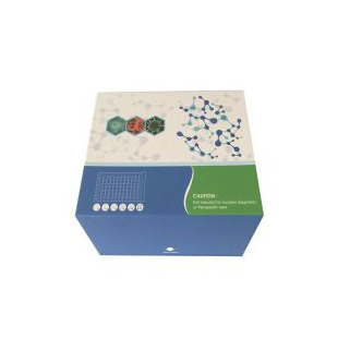大鼠血管緊張素轉化酶2(ACE2)ELISA試劑盒