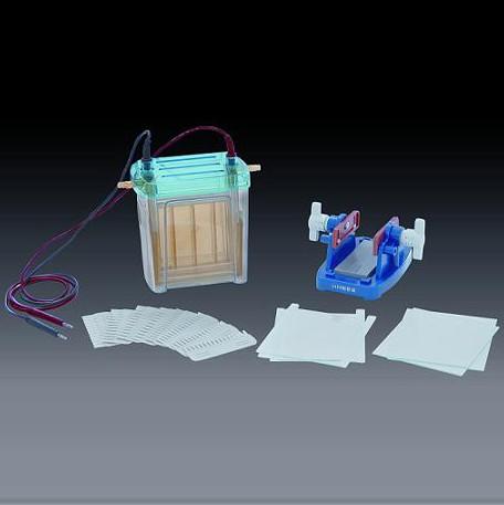 DYCZ-24EN双垂直电泳仪