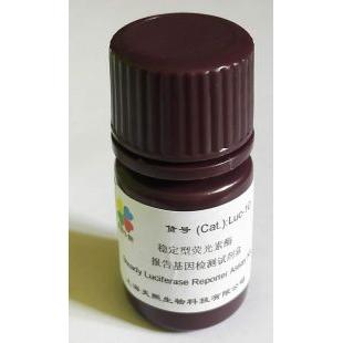 稳定型萤火虫荧光素酶报告基因检测试剂盒