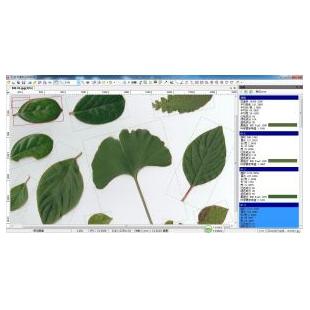 万深LA植物图像分析仪系统【叶面积分析独立版(含叶面积、病斑、虫损面积、叶色分档)