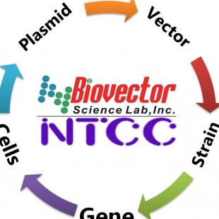 pcDNA3.1-GFP- NFT2,NRF2,GABPA,NRF2A,E4TF1A,E4TF1-6