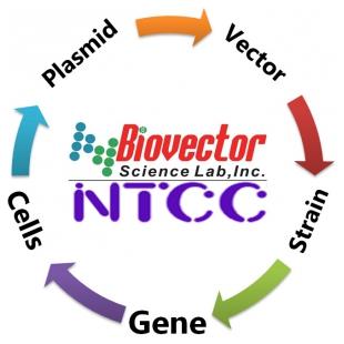 细胞基因质粒载体菌株pCMV6-entry-