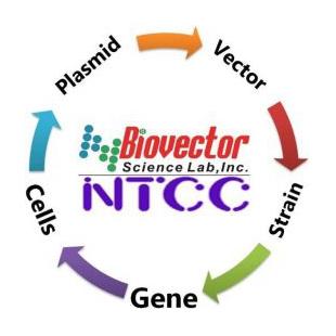 9a821db9e57 载体质粒BioVector NTCC中国质粒载体菌种细胞基因保藏中心