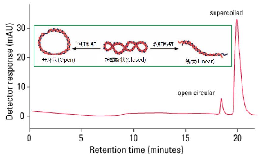 东曹色谱产品在质粒DNA纯化与分析中的应用