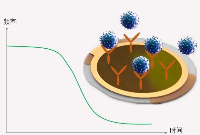 石英晶体微天平QCM技术应用于病毒检测