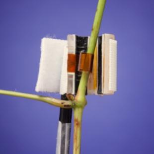 Dynagage 包裹式莖流傳感器