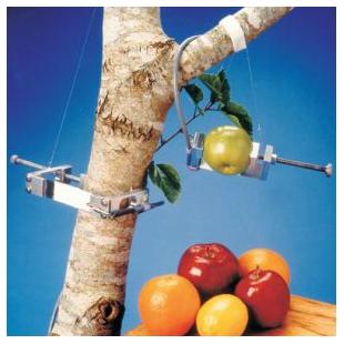 DEX果实-树木茎干生长测量仪