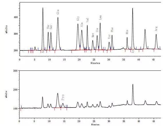 Biochrom30+氨基酸分析仪检测海鲈鱼中水解氨基酸