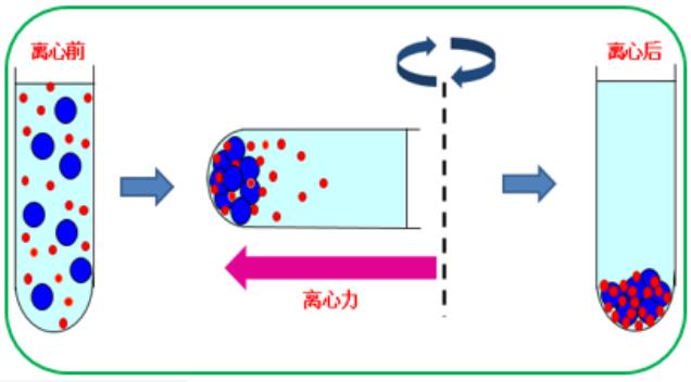 使用离心机进行样品纯化的方法介绍