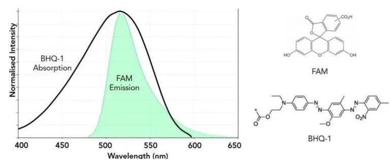 荧光光谱技术助力疫情病毒检测