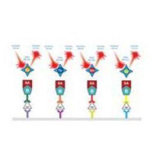 DELFIA 时间分辨荧光检测试剂