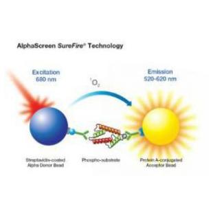 AlphaSurefire 激酶检测试剂
