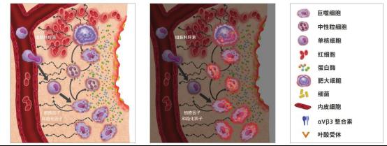 图 1.蛋白酶和半胱氨酸组织蛋白酶在溶酶体和细胞外间隙中表现出一定活性。ProSense 荧光信号激活示意图见右图.png