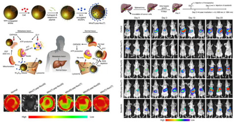 图3 光照切断肿瘤细胞能量供应.png
