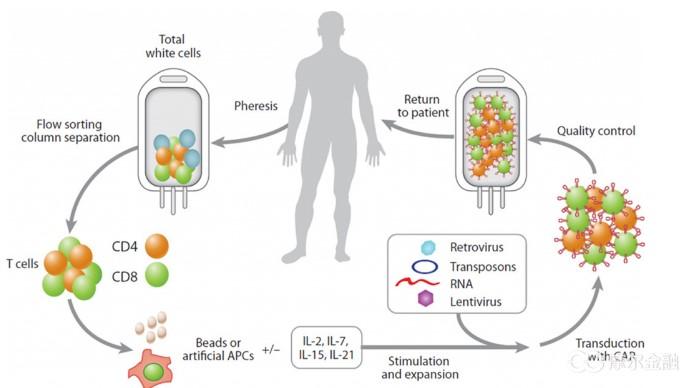 CAR-T�胞治��技�g介�B
