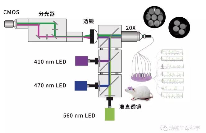 技术干货 | 双色多通道光纤记录系统