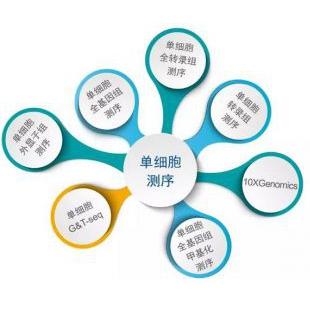 净信/杉米单细胞测序服务SMCXFW