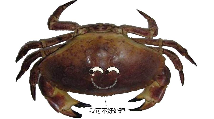 1.面包蟹.jpg