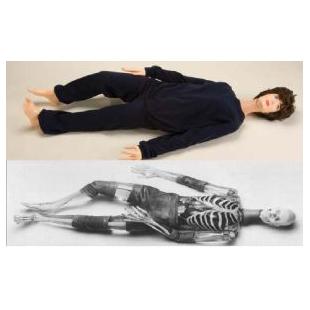 X射线医学影像模拟人X射线仿真人教学模体X射线教学模拟人