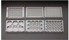 多孔培养皿/Multiplewell Plates