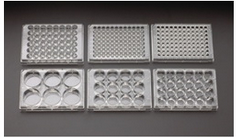 多孔培養皿/Multiplewell Plates