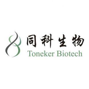 上海同科Western Blot蛋白免疫印迹技术服务