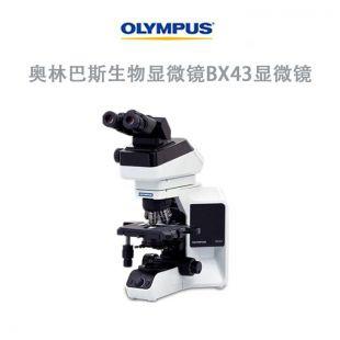 奥林巴斯生物显微镜BX43显微镜