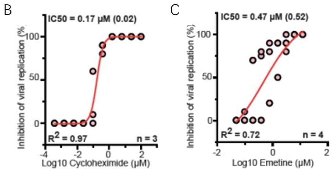 圖3. 環己酰亞胺和曲美汀對病毒復制的抑制作用.jpg