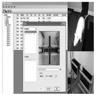 淮北软隆  十字迷宫 高架十字迷宫 十字高架迷宫  高架十字迷宫视频分析系统