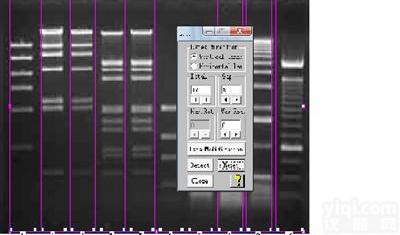 sim凝胶ub8优游登录娱乐官网像ub8优游登录娱乐官网统分析软件BIO-1D