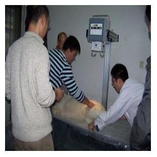 北京朗安影像便携式X光机