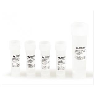 Neuro9TM转染试剂盒