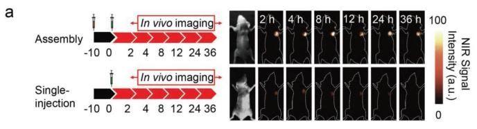 近红外二区小动物活体成像——高信噪比双成分造影剂协助肿瘤手术成像