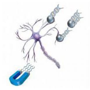 OZ BIOSCIENCES  NeuroMag TM磁转染试剂