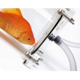 鱼类呼吸代谢监测系统