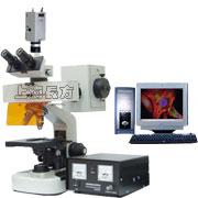 电脑型荧光显微镜