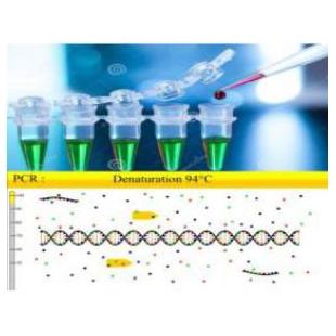 英国 PCRmax 小反刍兽疫病毒野毒株(PPRV-W)核酸试剂盒