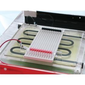 蛋白质双向电泳系?#24120;?#31561;电聚焦与第二维电泳)-CSL-IEF-KIT-MAXIPLUS(英国Cle