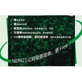NEPA21高效基因转染系统