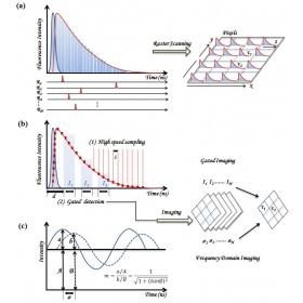 激光共聚焦荧光成像系统 FFS / FLIM