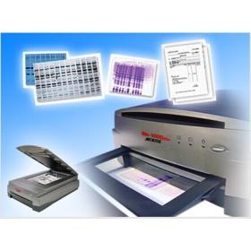 Microtek 蛋白电泳扫描仪(定量)