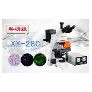 三目荧光显微镜XS-28C