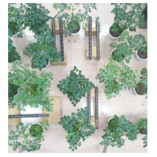 植物冠层在线分析系统MC-LAINet